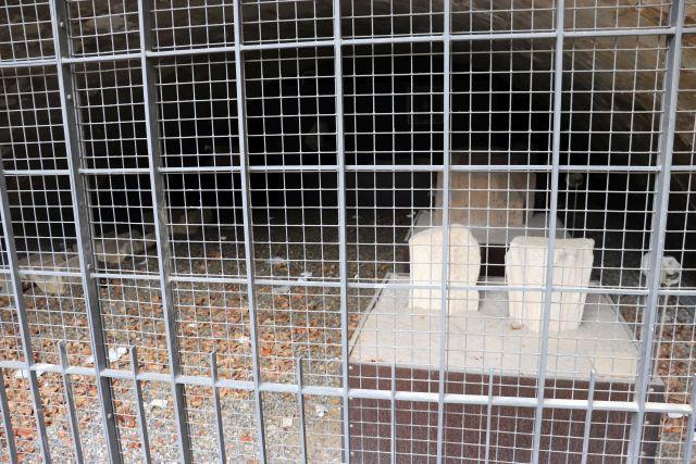 Zwei behauene Steine hinter einem Gitter, auf dem Boden welke Blätter und Papiermüll.
