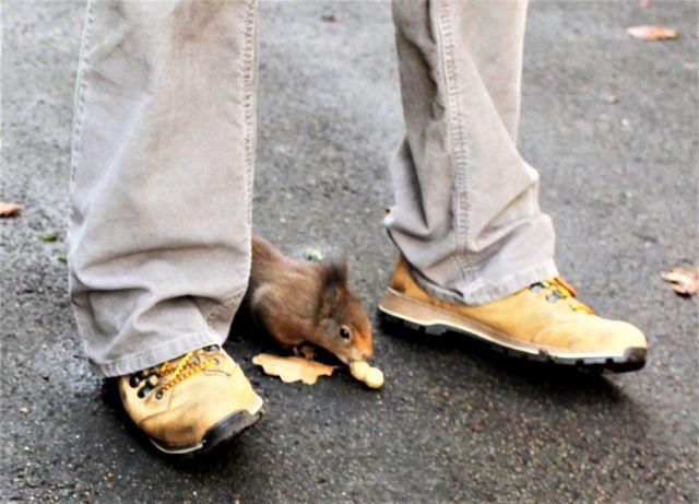 Eichhörnchen mit Erdnuss in der Schale zwischen zwei Schuhen einer Frau.
