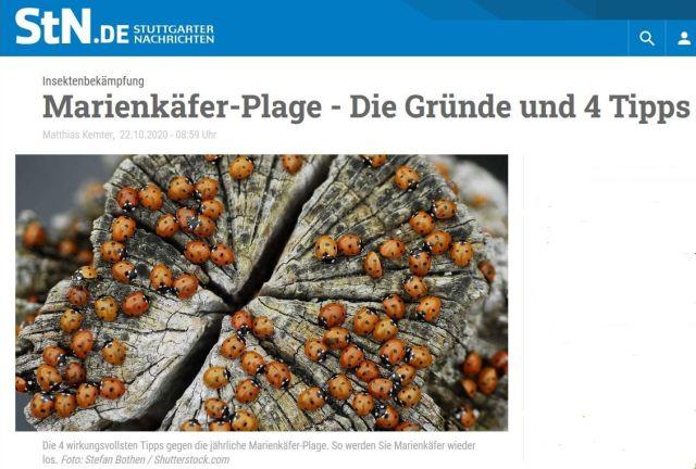 """Ausriss aus der Zeitung mit zahlreichen Marienkäfern auf einem Baumstumpf. Text: """"Marienkäfer-Plage - Die Gründe und 4 Tipps""""."""