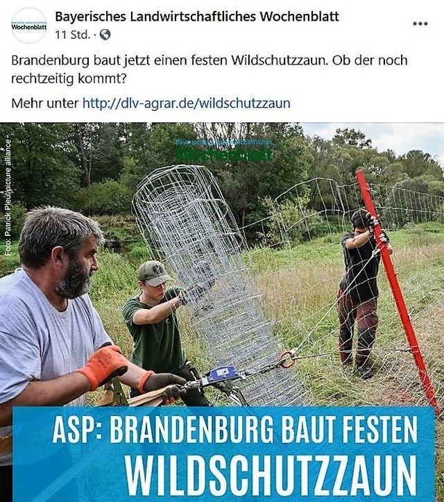 Drei Männer beim Bau eines hohen Wildschutzzauns auf einer Wiese. Im Hintergrund: Wald.