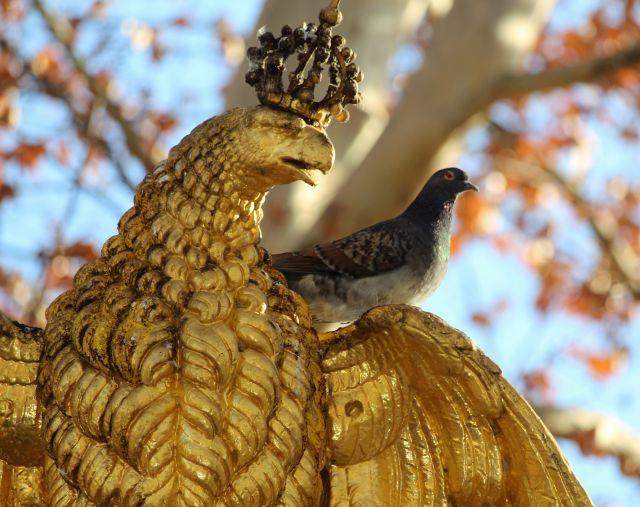 Eine lebendige Stadttaube auf dem Flügelansatz einer goldenen Adlerskulptur sitzend. Das Denkmal steht in Stuttgart.