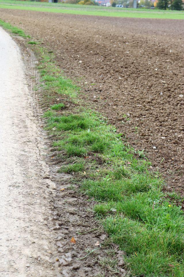 Ackerrand mit etwas Gras ist zwischen Acker und Feldweg kaum noch zu erkennen.