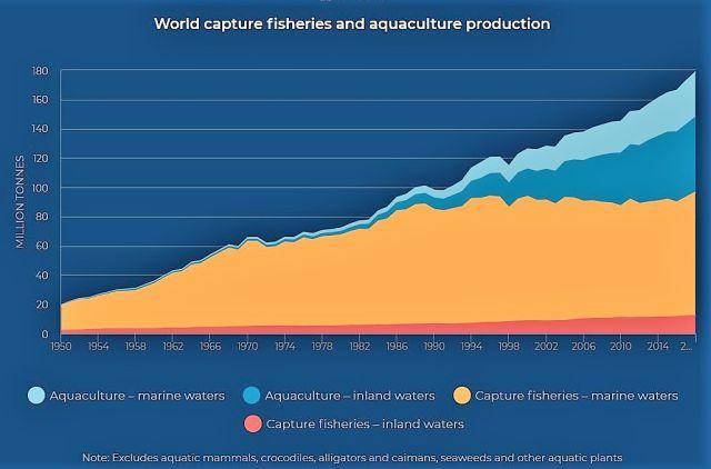 Grafik in bkau und orange. Sie zeigt den steigenden Anteil der Fischfarmen an der gesamten Fischproduktion. Details im Text.