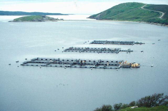 Lachsfarm in einer schottischen Buch. Die Käfige sind im Meer befestigt.