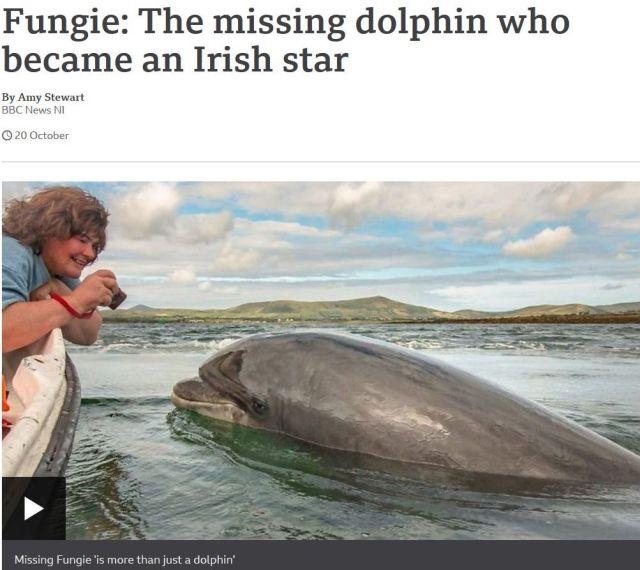 """Screenshot aus der Internetseite der BBC. Fungie lässt sich von einer Besucherin fotografieren. Text: """"Fungie: The mising dolphin which became an Irish star""""."""