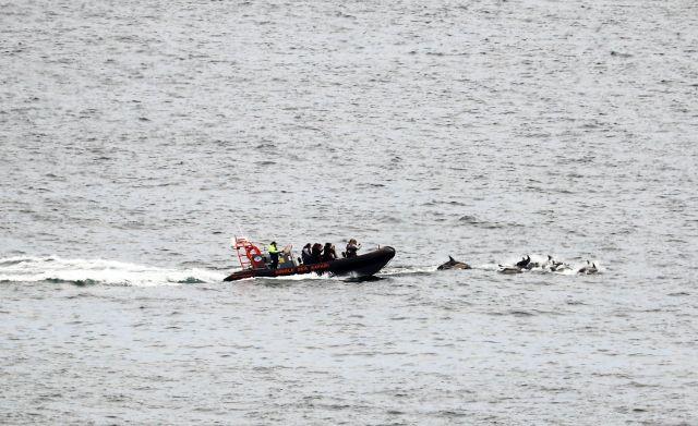 Ein Boot fährt sehr nahe an jagende Delfine heran.