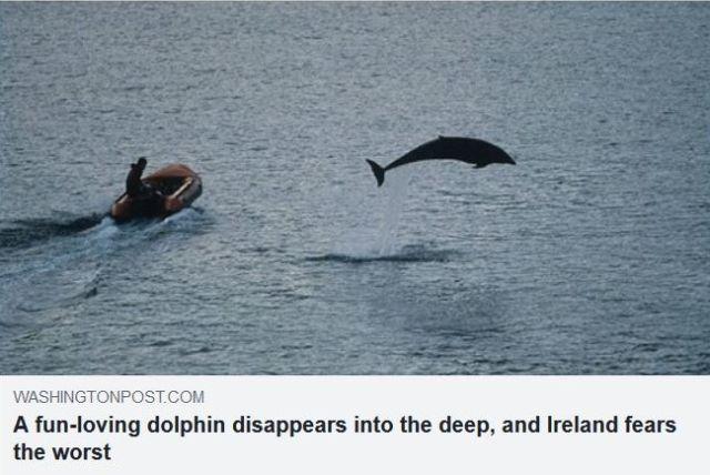 Foto aus der Washington Post mit einem kleinen Boot und Fungie, der in die Luft schnellt.