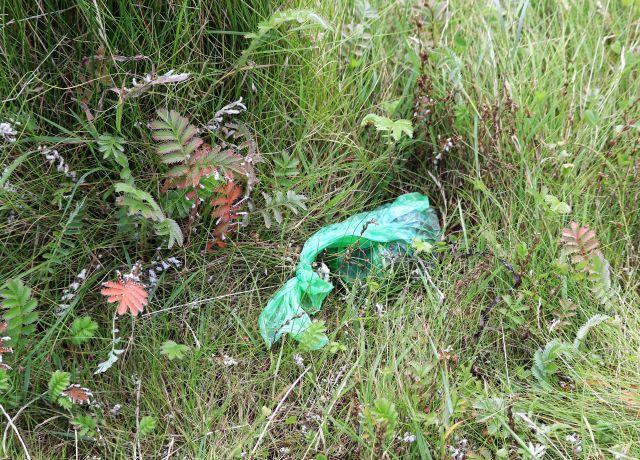 Grüne Plastiktüte, erkennbar für Hundekot. Gefüllt und oben stark zugeknotet. die Tüte liegt im höheren Gras.