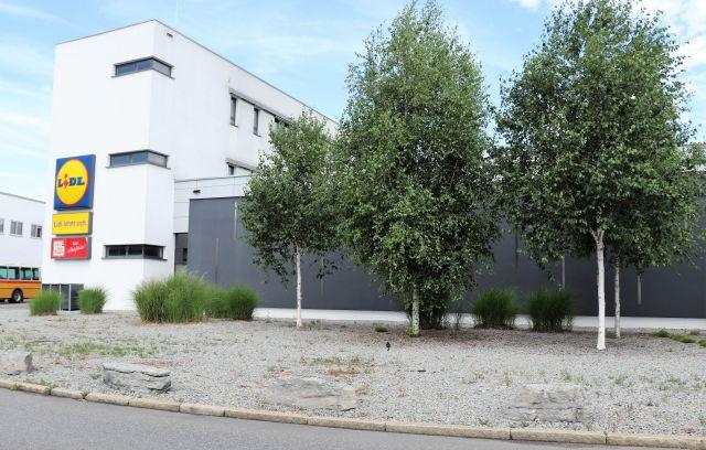 Geschotterte Fläche mit wenigen Birken vor einem Gebäude.