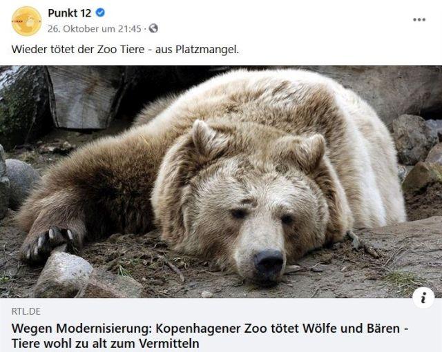 """In einem Facebook-Post ist ein alter Braunbär zu sehen, der auf dem Boden liegt und nach vorne schaut. """"Wieder tötet der Zoo Tiere - aus Platzmangel"""". Und: """"Wegen Modernisierung: Kopenhagener Zoo tötet Wölfe und Bären - Tiere wohl zu alt zum Vermitteln."""""""