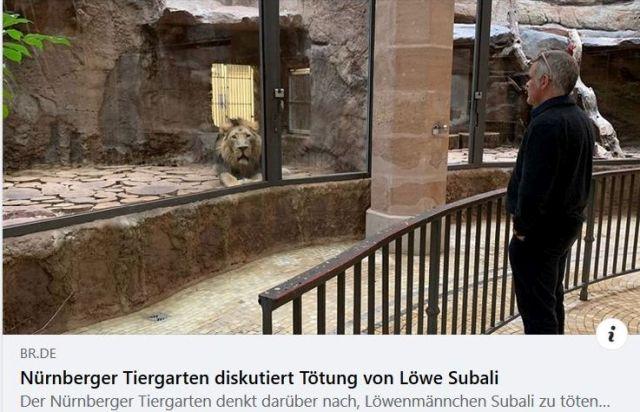 """Facebook-Post mit einem Löwen und dem Text: """"Nürnberger Tiergarten diskutiert Tötung von Löwe Subali."""