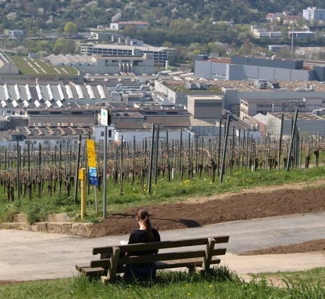 Eine Person sitzt auf einer Bank. Weiter unten Weinberge, dann Industrielandschaft.