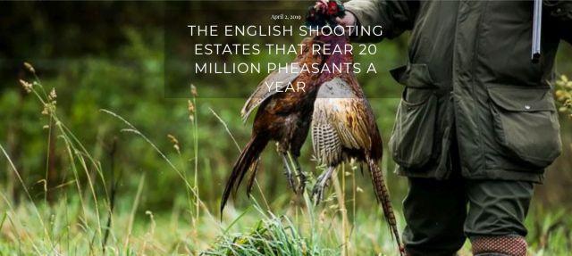 Eine Hand hält zweite tote Fasane. Text: The English Shooting Estates thar Rear 20 Million Pheasants a Year.
