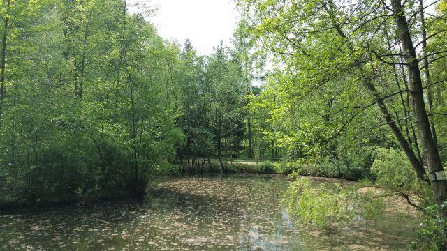 Ein von Laubbäumen gesäumter kleiner See. Auf dem Wasser treiben Blätter.