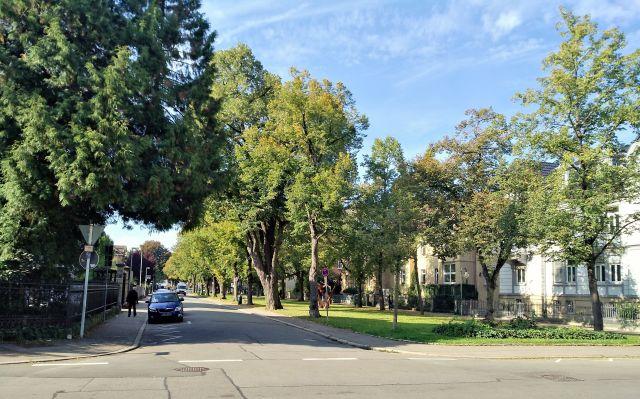 Schmale Straße mit grünen Bumen.