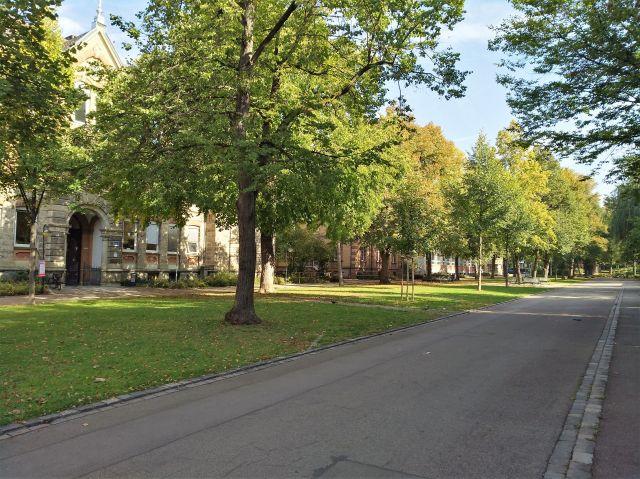 Kleine Straße in einem Wohngebiet mit zahlreichen Bäumen.