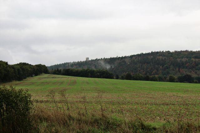 Blick auf eine Landschaft: Vorne einzelne verdorrte Kräuter, dann Wiese und Wald. Im Wald ein Turm, der kaum zu sehen ist.
