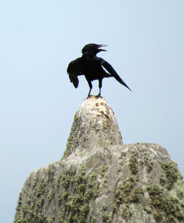 Eine schwarze Krähe mit offenem Schnabel auf einem hellen Stein in Stonehenge.