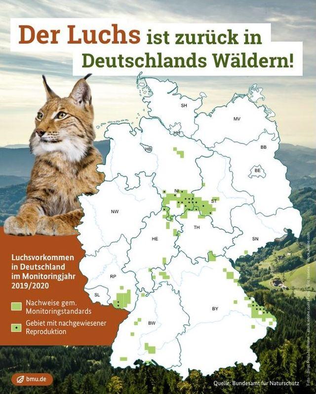 Übersichtskarte von Deutschland. Links ein Luchs. In der Karte sind die bekannten Luchsvorkommen in grüner Farbe eingezeichnet.