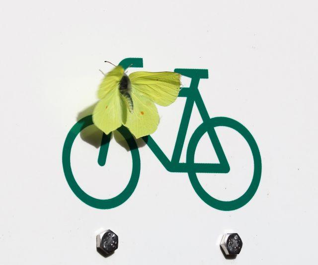 Ein Zitronenfalter sitzt auf dem Lenker eines Fhrrads: allerdings auf einem Hinweisschild für einen Fahrradweg.