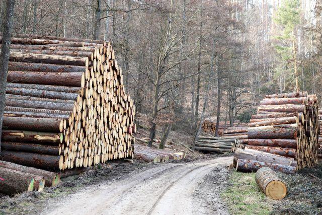 Riesige Holzstapel links und rechts vom Weg. Die Schnittflächen sind zum Weg ausgerichtet. Die Stapel sind drei bis vier Meter hoch.