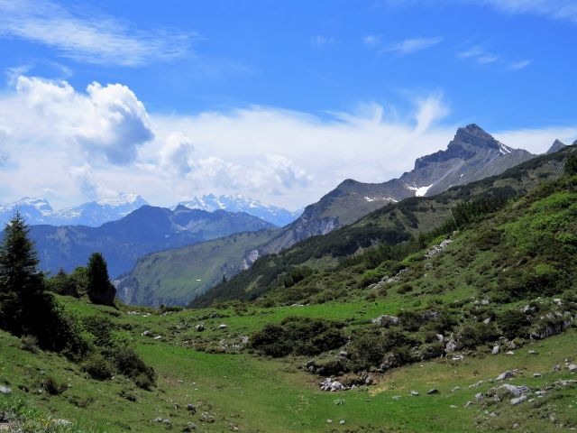 Bergpanorama. Im Vordergrund Almwiesen.
