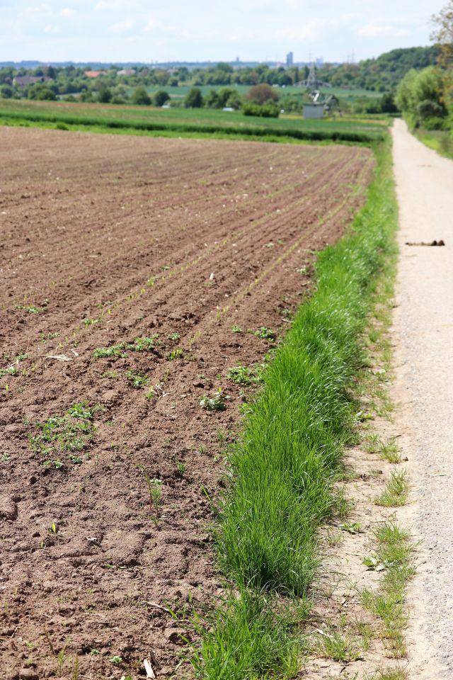 Ein kaum erkennbarer Ackerrand mit etwas Gras zwischen Feld und asphaltiertem Weg.