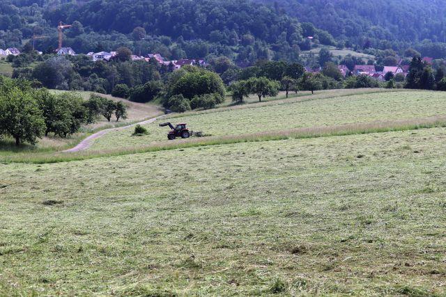 Ein Traktor beim Heu wenden. In der Bildmitte blieb ein Streifen mit höherem Gras erhalten. Links einige Bäume von Streuobstwiesen.