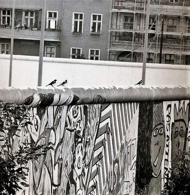 Drei Elstern sitzen auf der Krone der Berliner Mauer.