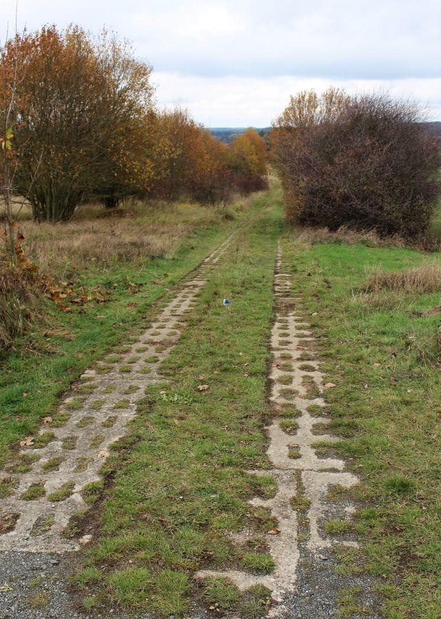 Ein Weg aus Betonsteinen umgeben von Büschen und kleinen Bäumen.