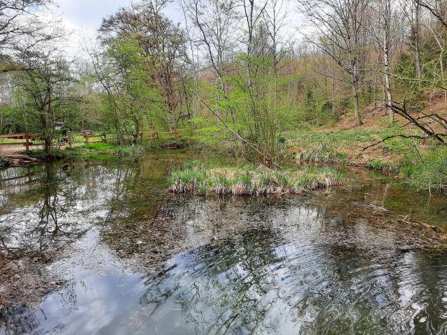 Eine kleinere Wasserfläche umgeben von einigen Bäumen.