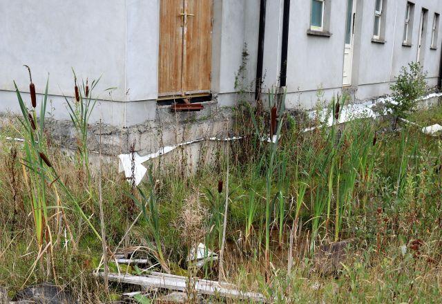 Schilfgras und Rohrkolben wachsen direkt an einem nie fertiggestellten Haus.