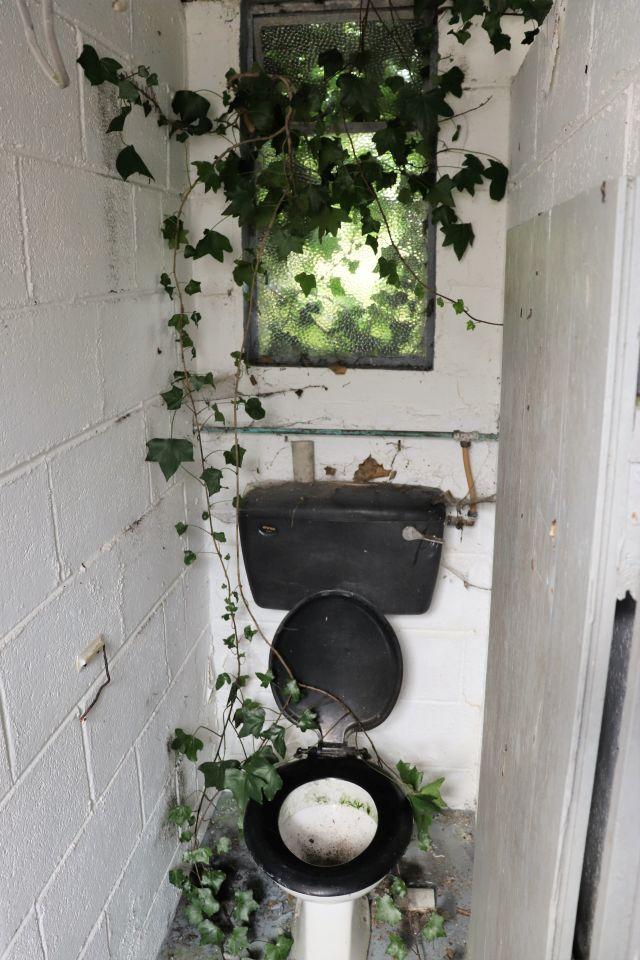 Grünes Efeu rankt durch das Fenster in ein WC. Es hat bereits die Kloschüsel erreicht.