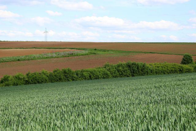 Eine Hecke mit Büschen verläuft zwischen einem grünen Kornfeld und einem bereits abgeernteten braunen Acker durch die Landschaft.