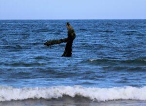 Ein dunkles Metallteil ragt aus dem Meer. Nach links geht ein Teil ab. Das Objekt ist mit Seetang bewachsen und Seepocken.